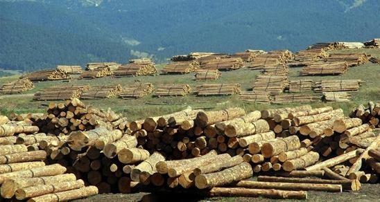 Ormancılık Alanında 3 Adet Taslak Yeterlilik Hazırlandı